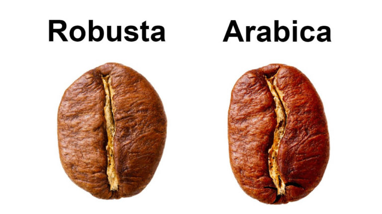 The top ten differences between Robusta and Arabica coffee