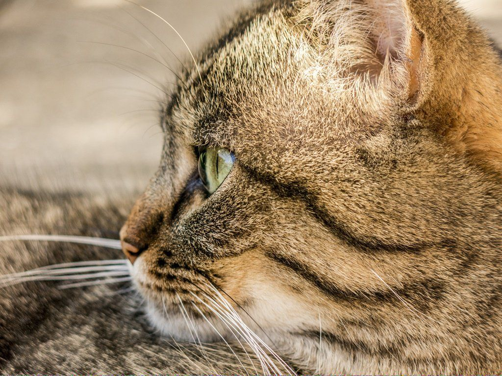 Pin by DarleneDJohnson196005 on Why Cats Vomit Cat in