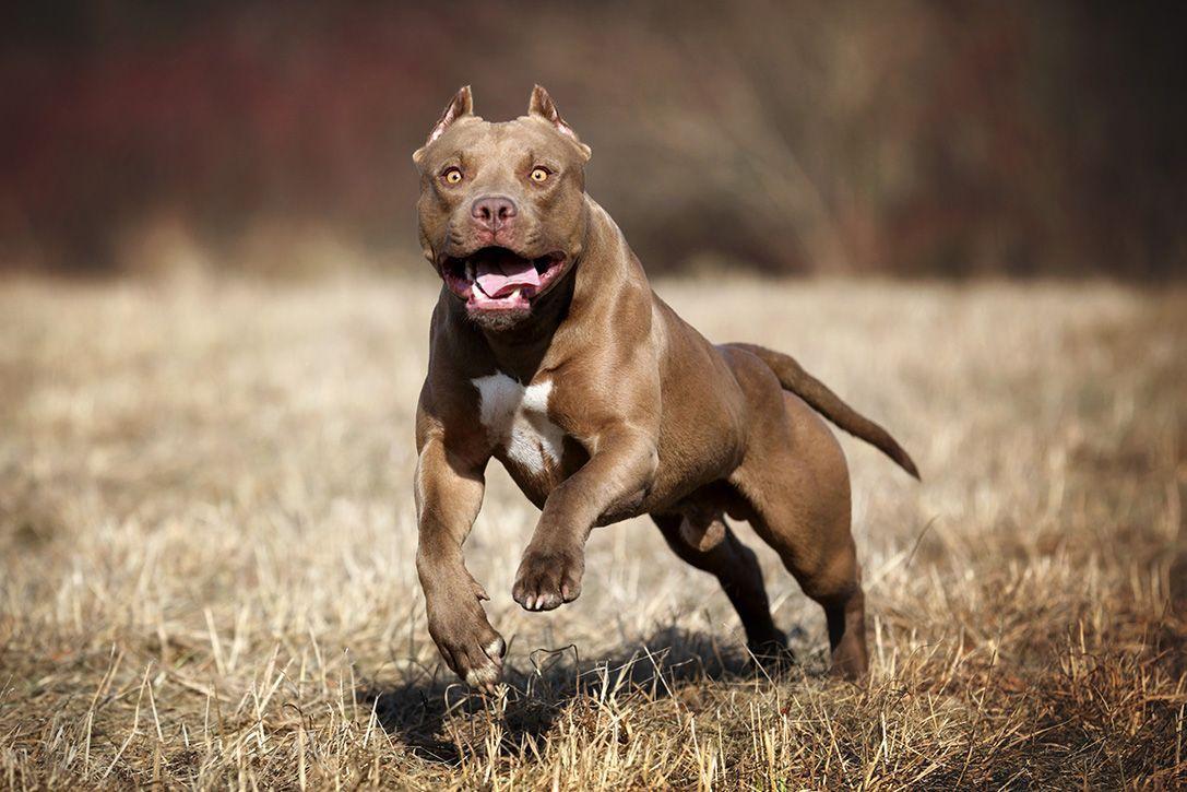 Guard Dog Training Guarddogtraining Best Guard Dog Breeds Best