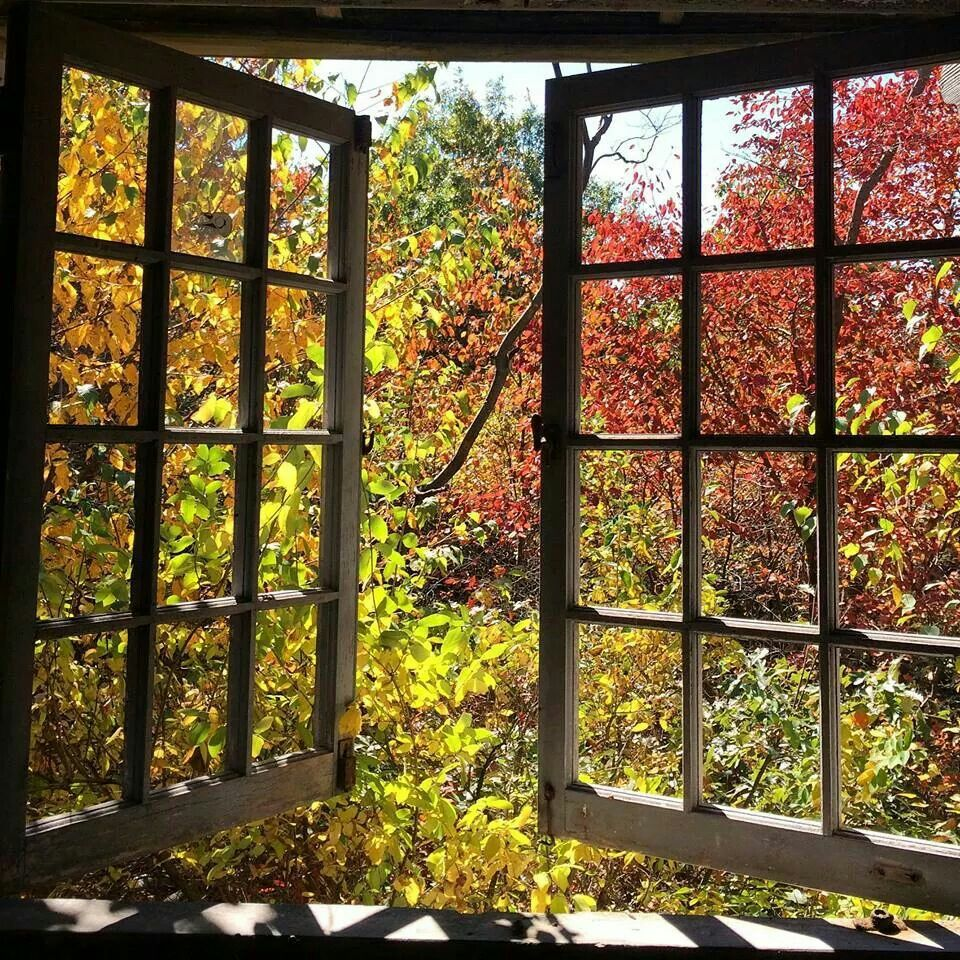 Picture perfect of fall!!