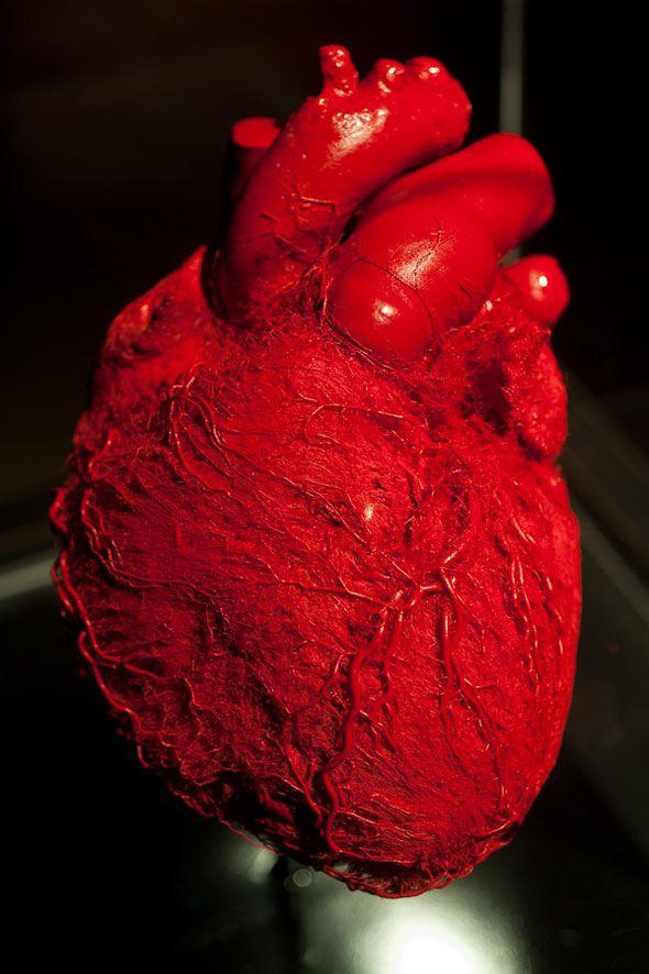 Body Worlds Toronto   CORAZON   Pinterest   Corazón roto, Rojo y ...