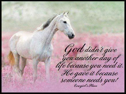 God\'s Christian Warriors Inc on | Just Me | Horse quotes ...