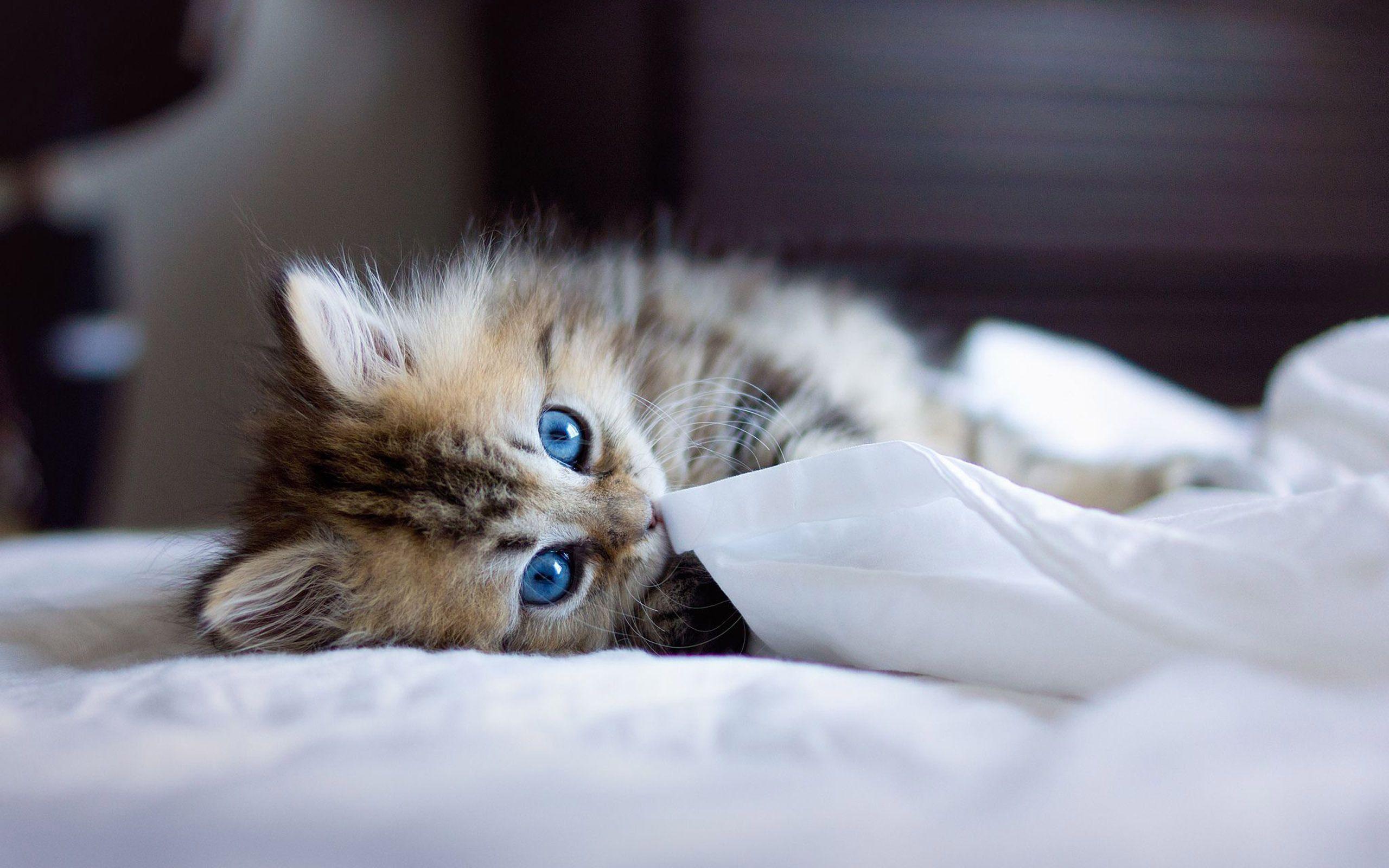 Kitten Wallpapers High Resolution Kitten Wallpaper Cats Pet Birds