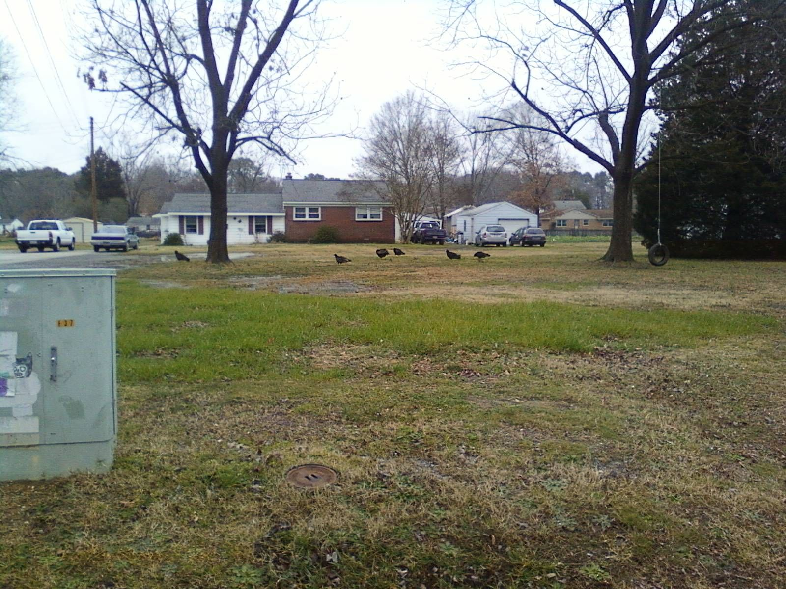 They are a little hard to see (I only had my very basic cell phone to snap the picture), but those are vultures in my neighbor's front yard.  They are so big!