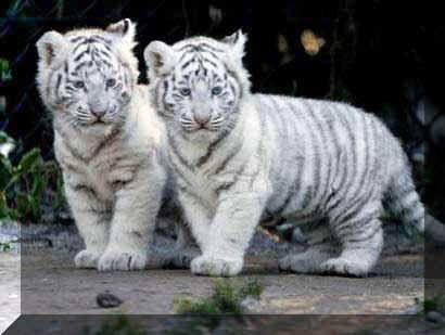 schattige dieren - Google zoeken