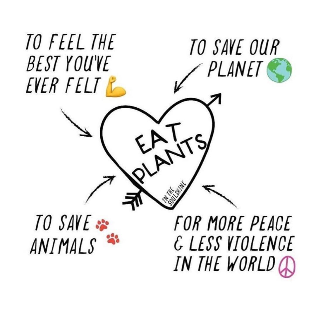 #vegansofinstagram #veganlifestyle #veganlife #animalliberation #vegan #vegetarian #vegan #govegan #animalrights #veganism #vegansofig #crueltyfree #veganism #veganfood #plantbased Reasons to go vegan! What's your motivation @inthesoulshine . . . . #vegetarianquotes
