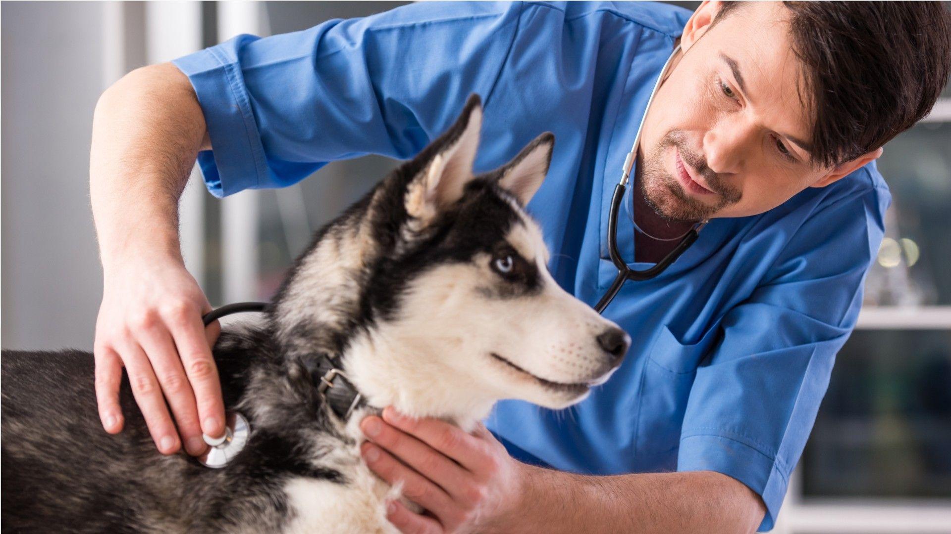 Career Video Of A Veterinarians Job Occupation Dog Vet Visit Sick Dog Veterinarian