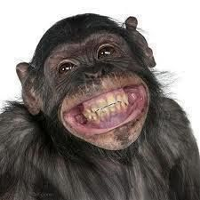 chimpanzee smiling