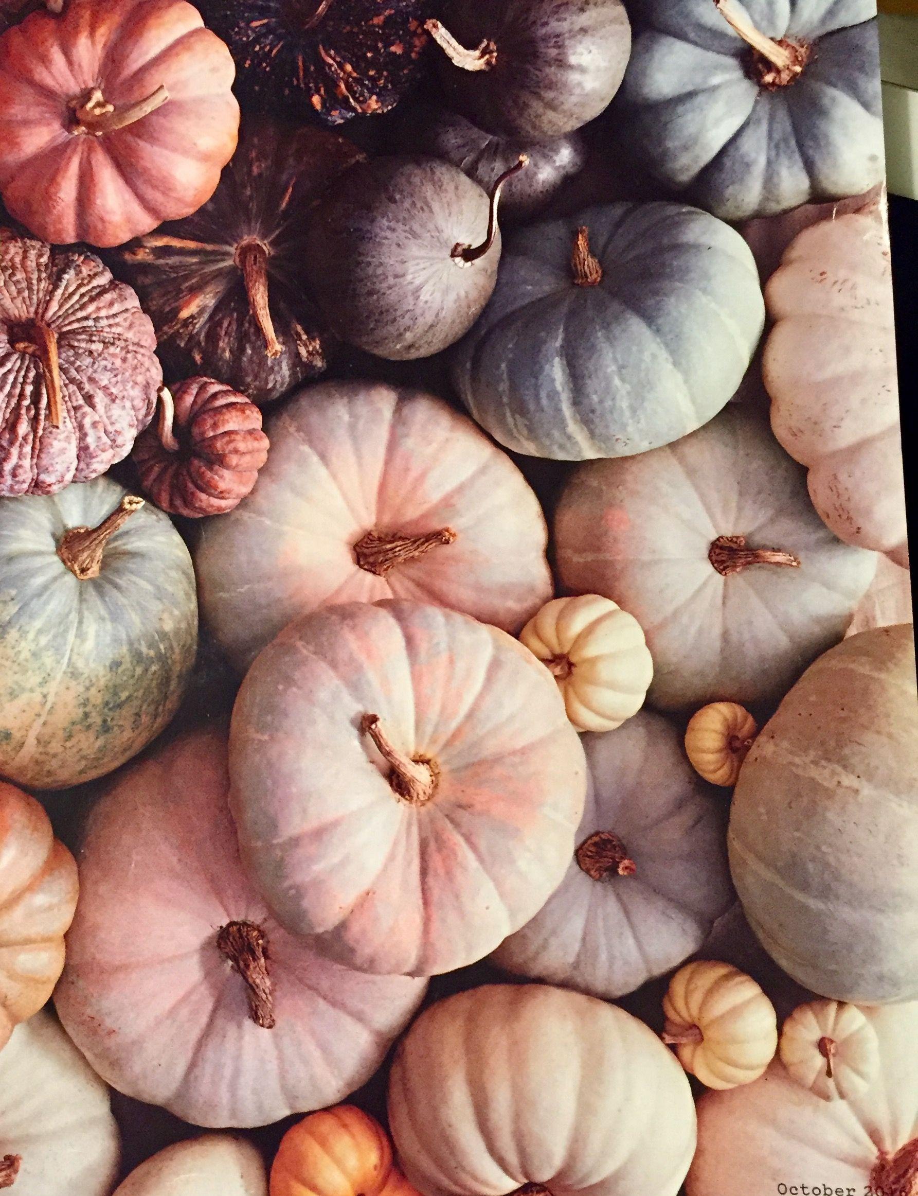 𝚙𝚒𝚗𝚝𝚎𝚛𝚎𝚜𝚝 emerald sue 🍂 Fall pumpkins, Fall background