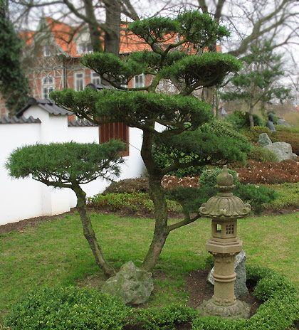 Bonsai im Japanischer Garten in Bad Langensalza Lanterne
