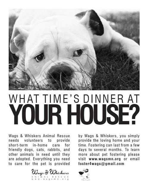 Become A Foster For Wags Whiskers Animal Rescue Of Mn Help Homeless Pets Dog Friends Homeless Pets