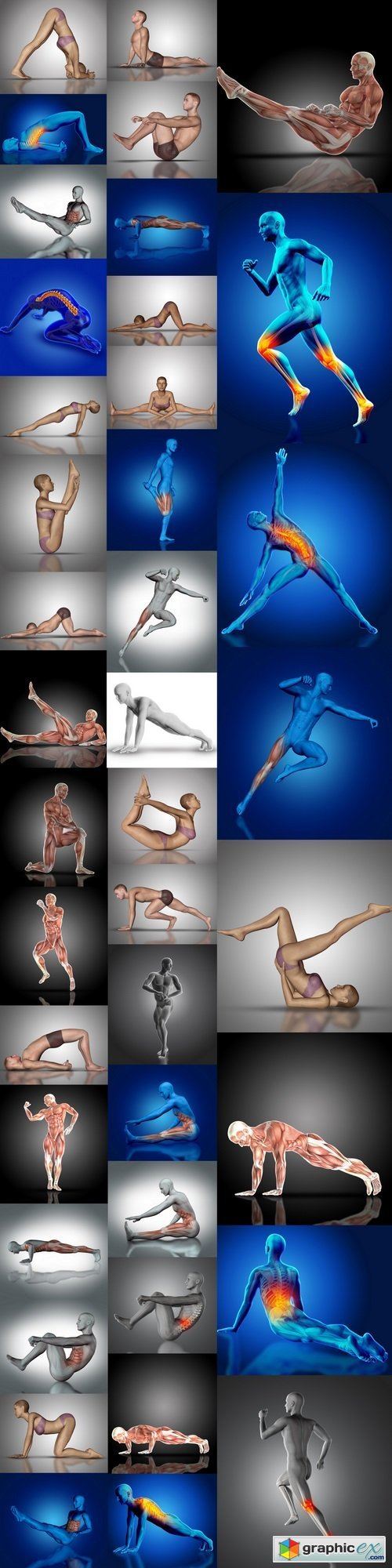 3D render of a medical figure with muscle map  stock images