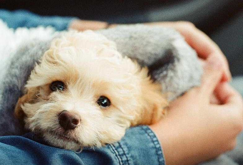Pet Adoption Near Me Free Dog adoption, Pet adoption