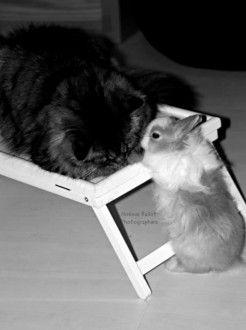votez pour ce #chat et ce #lapin http://www.zoomalia.com/photomalia/photo/42-p359 #concours #photomalia #zoomalia #animalerie