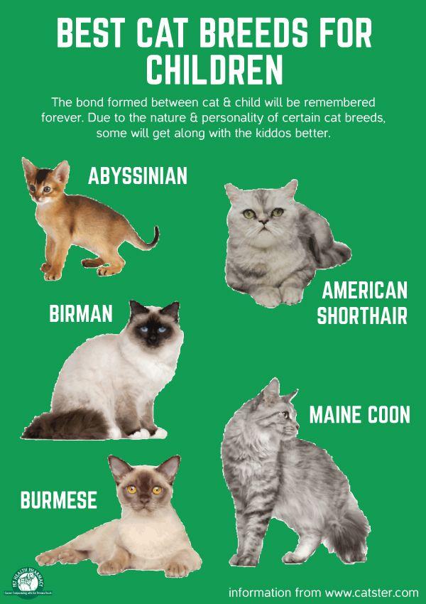 Best Cat Breeds For Children Cats Children Best Cat Breeds