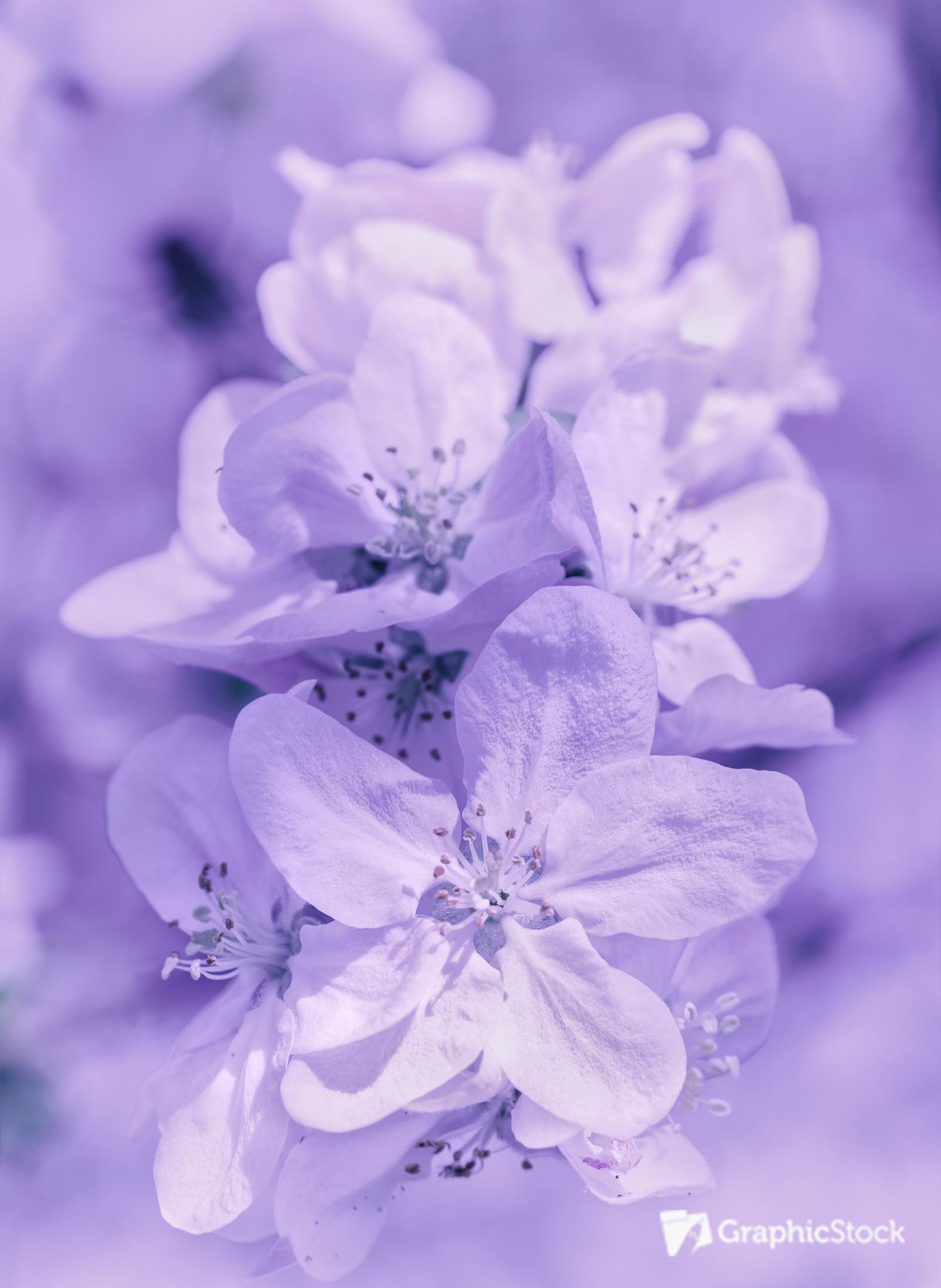 light purple flower background wwwpixsharkcom images