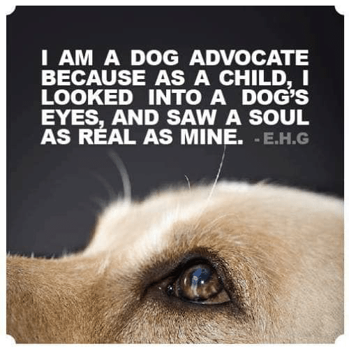 I Am A Dog Advocate Because As A Child I Looked Into A Dog S Eyes And Saw A Soul As Real As M Dog Eye Inspirational Quotes About Success Inspirational Quotes
