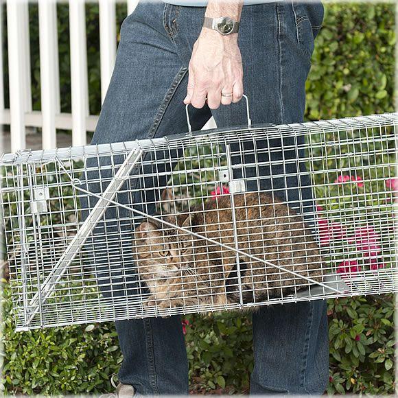 Havahart Feral Cat Trap Rescue Kit 32 L X 10 W X 12 H Ideal