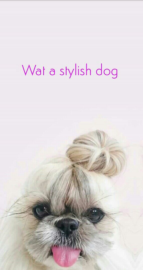 How Stylish Can A Dog Be Dog Wallpaper Iphone Cute Dog Wallpaper Puppy Wallpaper Iphone