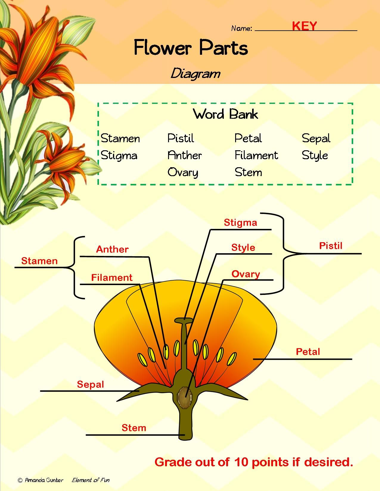 Parts Of A Flower Science Read Aloud Book Lesson Plans