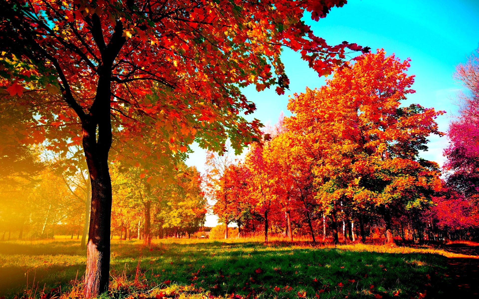 autumn trees leaves tree fall 3d wallpapers wall murals