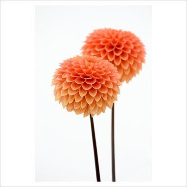 Peach Dahlias Flower Centerpieces Wedding Plant Pictures Flower Centerpieces