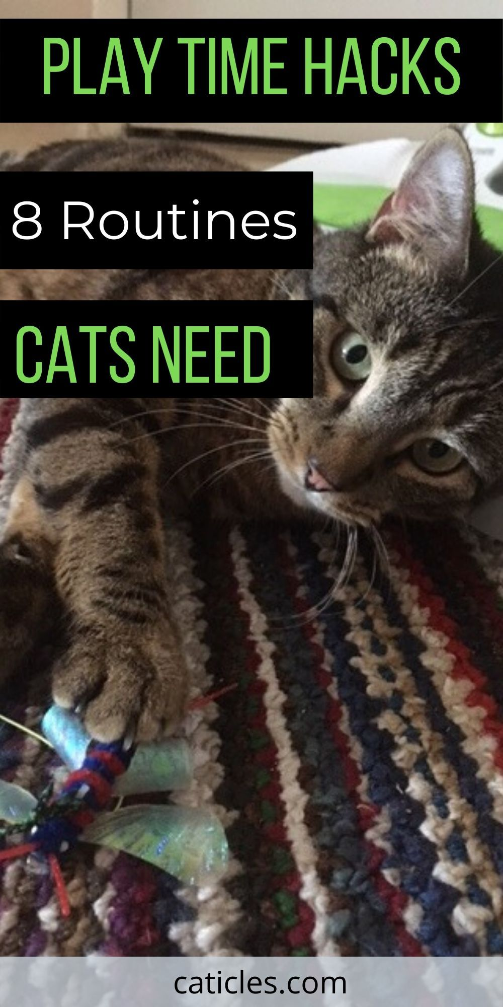Cat Rituals That Stop Your Cat From Waking You At 3 Am Cats Cat Care Cat Hacks