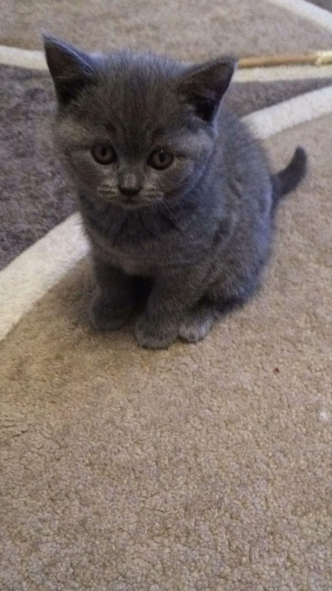 My cat 😻