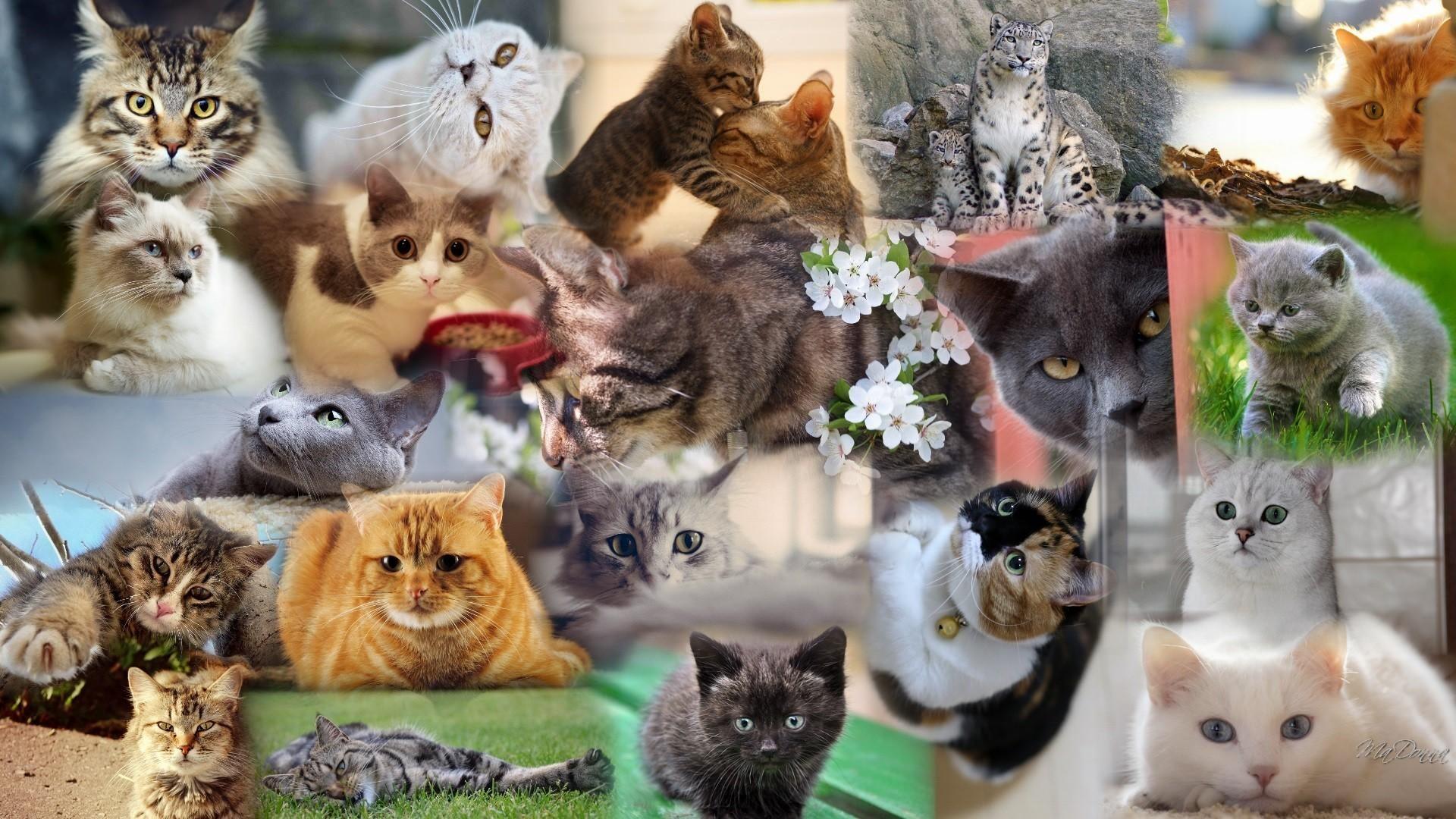 рекомендовал несколько фотографий одного котенка ваш кругозор