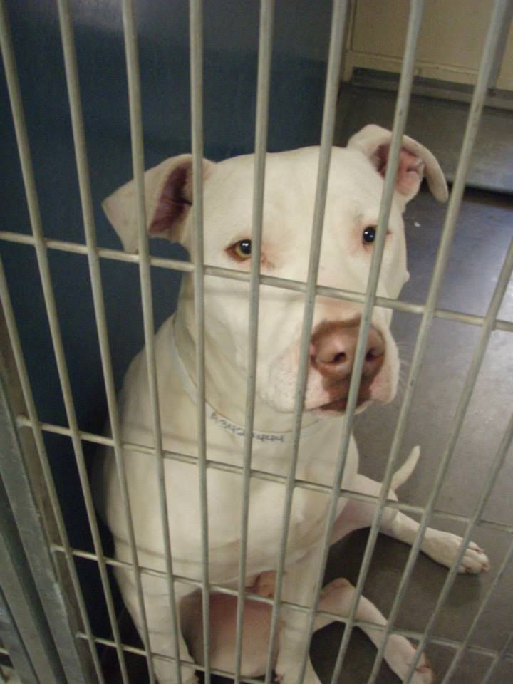 14++ Maricopa county animal care and control ideas