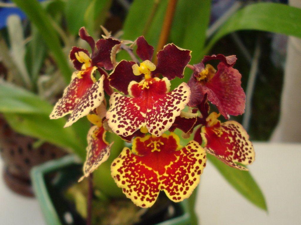 orchideen pinterest. Black Bedroom Furniture Sets. Home Design Ideas