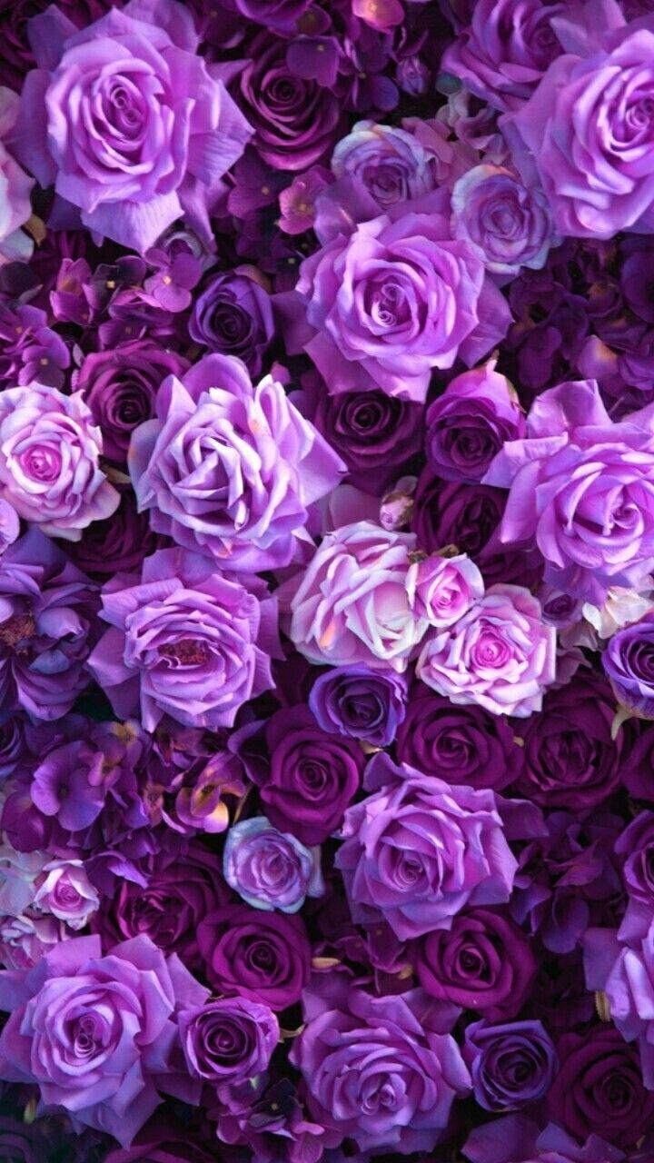 Purple Roses Background Images: Pin By Sahar Khaled On Floral