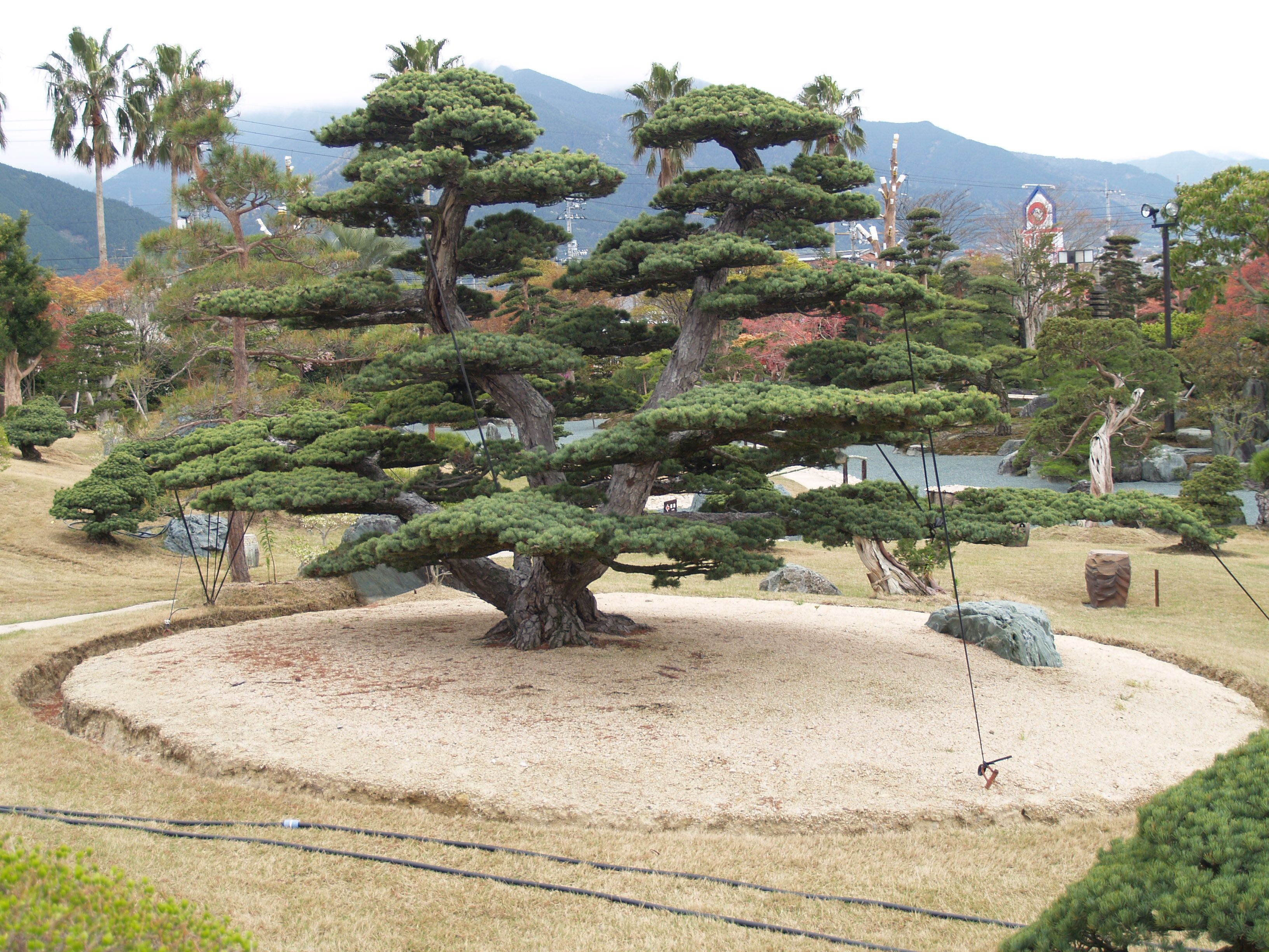 Takasago An Bonsai Garden Japan