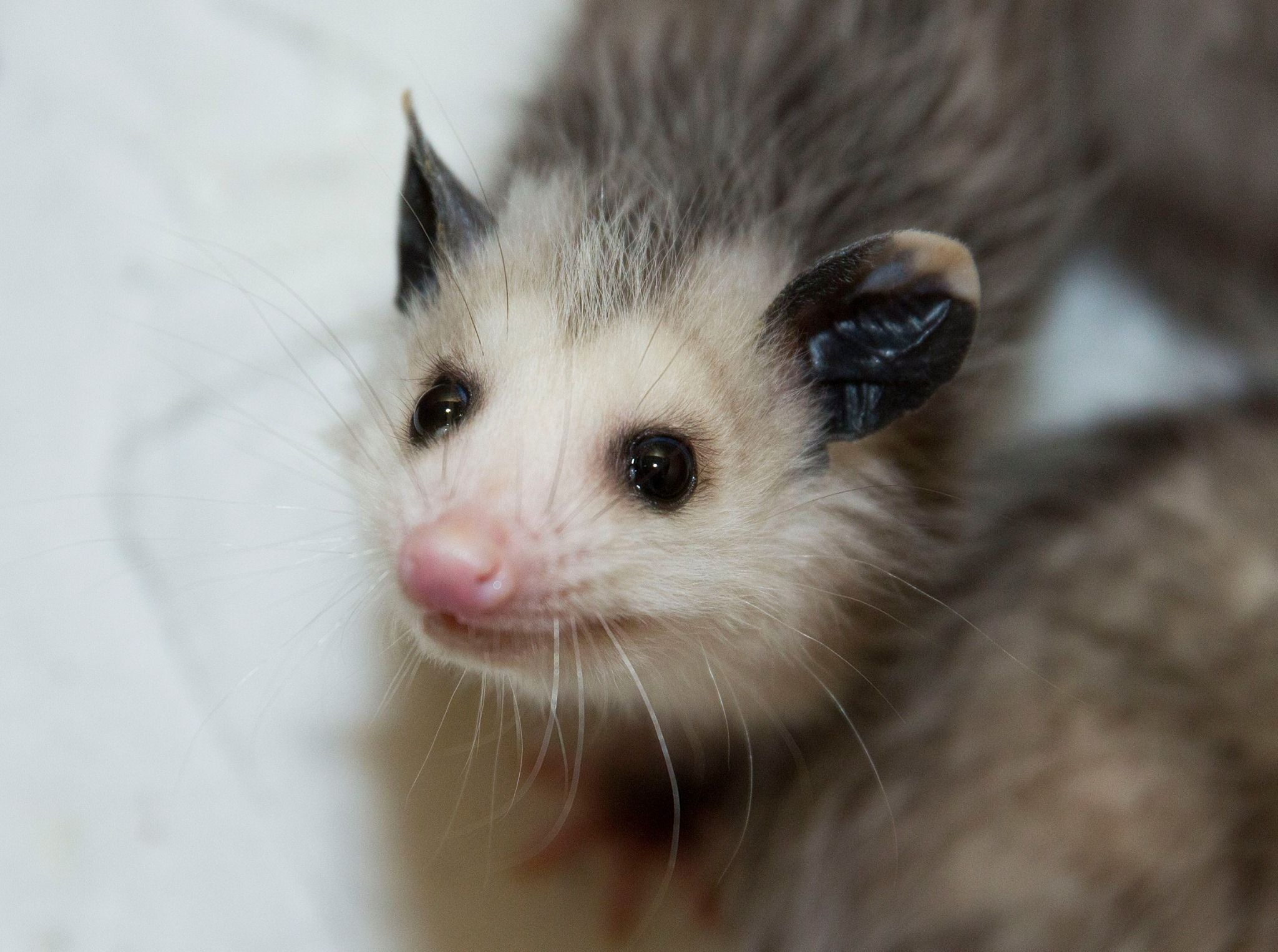 by: Wally the Opossum