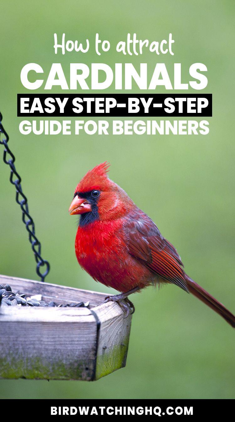 4 Simple Strategies To Attract Cardinals To Your Feeders 2021 Bird Watching Hq Bird Feeding Station Missouri Birds Bird