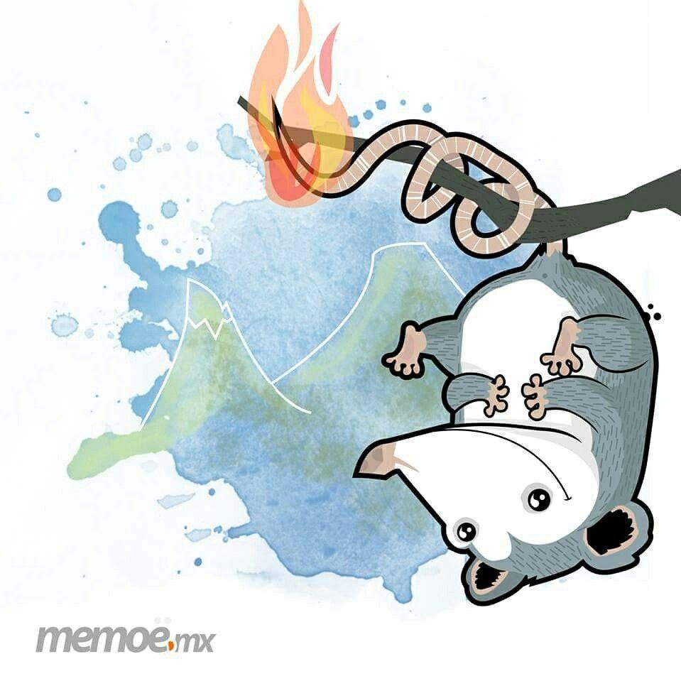 Memoe Bocanada Ilustration Ilustracion Tlacuache Zarigueya Colima Volcanes Character Ilustrandocolima Character Dood Disenos De Unas Doodle Dibujos
