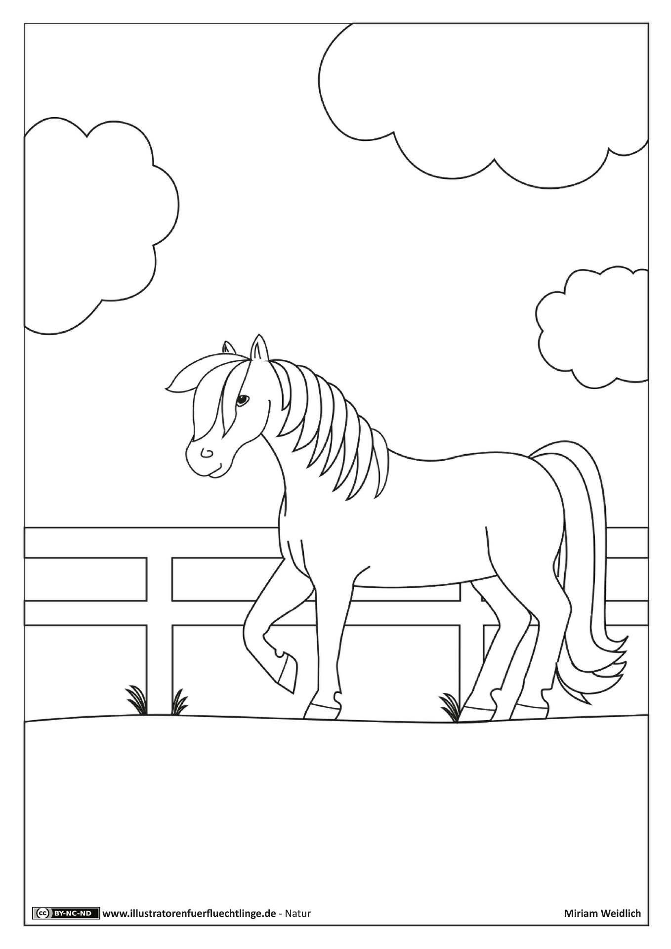 Natur Pferd Koppel Weidlich