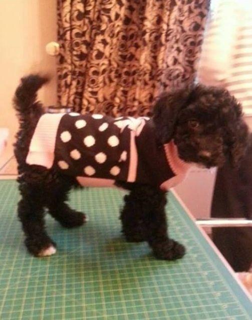 Pippa's new coat