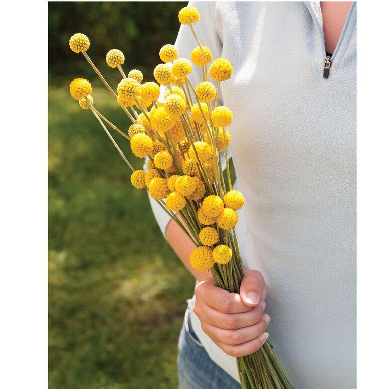 Pin On Flower Farm