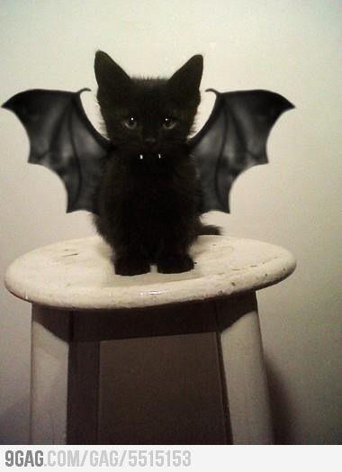 Halloween kitty idea