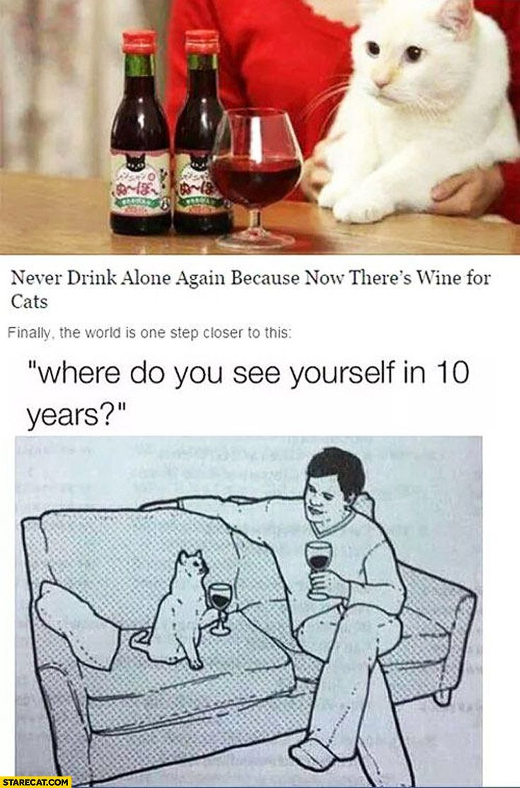 New wine for cats one step closer to where do you see