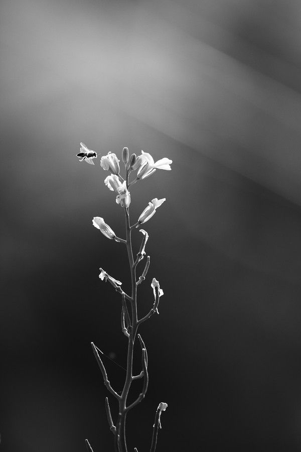 Goodnight by Seksun Oonjitti on 500px