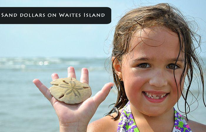 waties island shelling tour - $45/adult