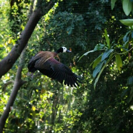 Los Angeles Zoo and Botanical Gardens in Los Angeles, CA | Things I ...