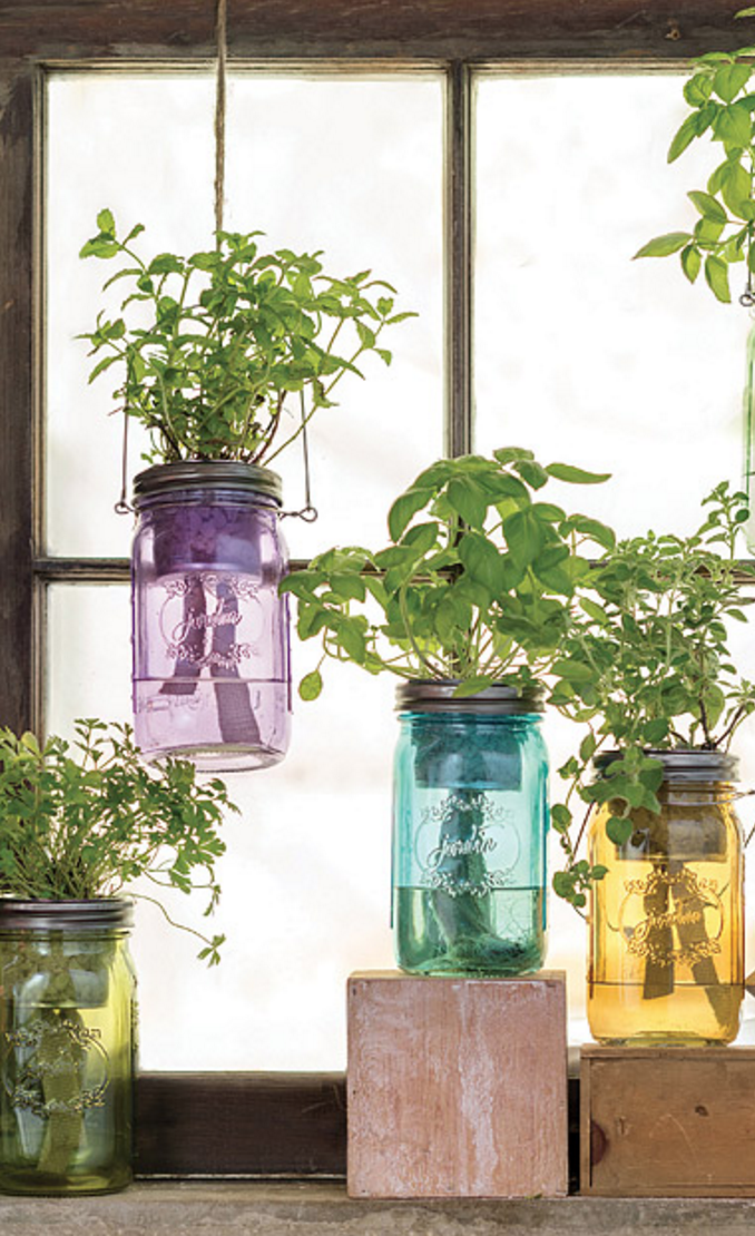 Mason Jar Indoor Garden Kit