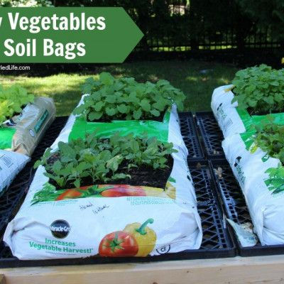 How To Grow Vegetables In Garden Soil Bags Growing 400 x 300