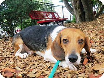Pin By Bryan Schaaf On Rescue Dogs And Cats Beagle Mix Pets