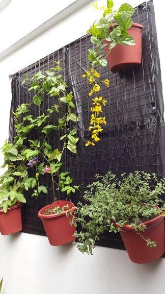 Flowering vines vertical garden