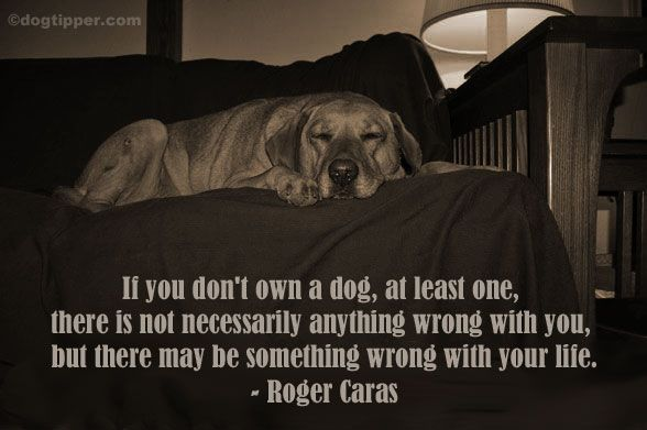 So many good dog quotes from Roger Caras!
