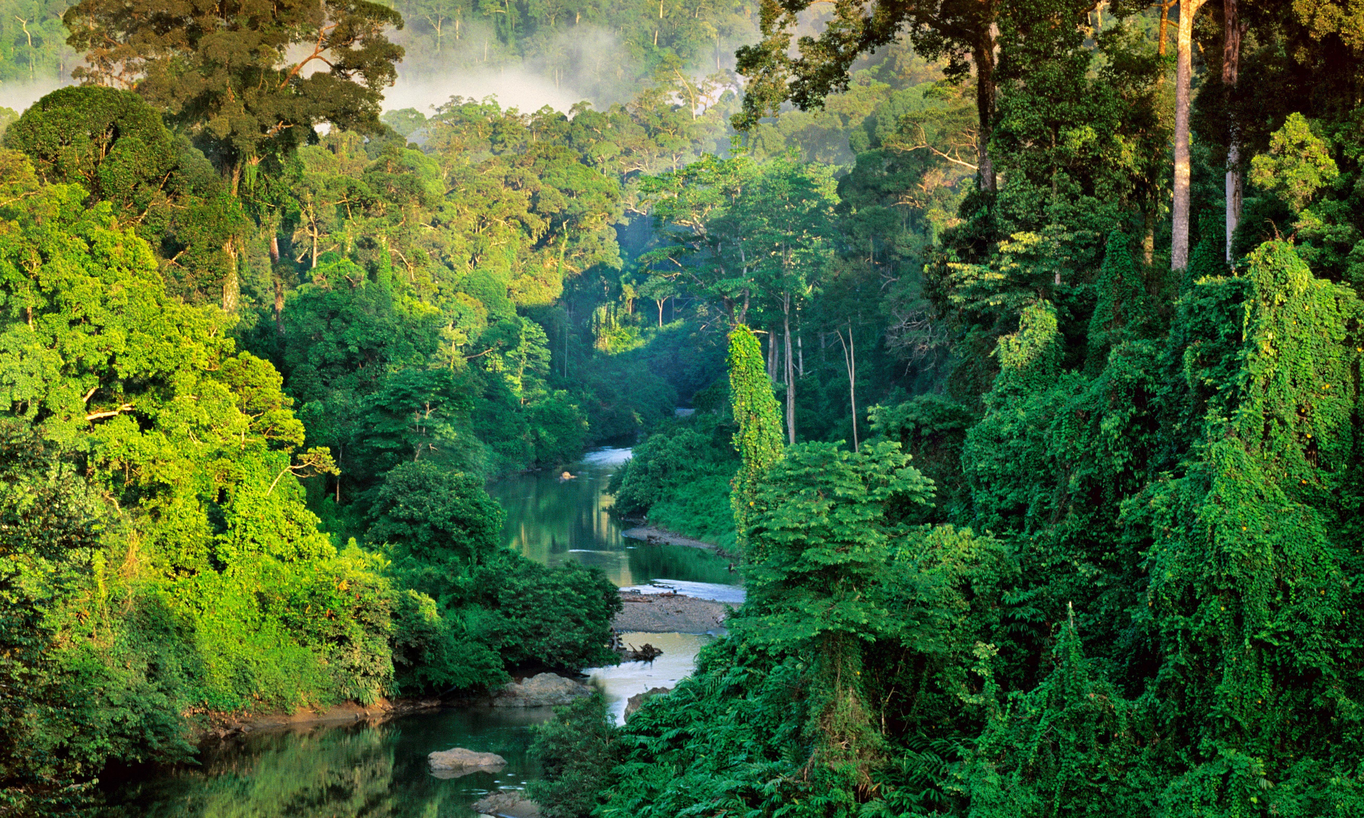 Franz Lanting Photo Of A Rainforest